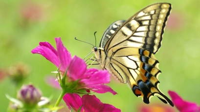 butterfly-rests-on-flower-295669
